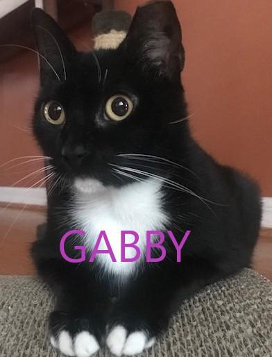 Gabby potw cat 9.23.20