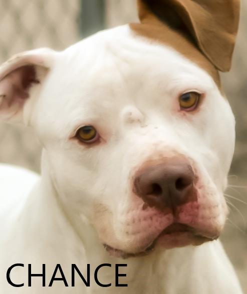 chance potw dog 2.16.20