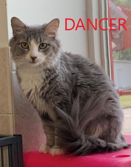 Dancer potw cat 6.11.21