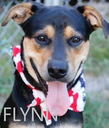 Flynn potw dog 1.14.21