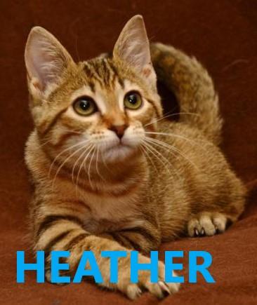 Heather potw cat 6.4.20