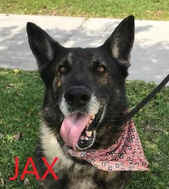 Jax potw dog 5.1.21
