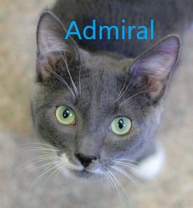 Admiral potw cat 3.30.20