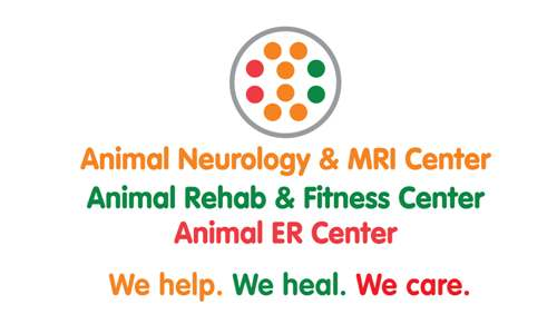 Animal Neurology