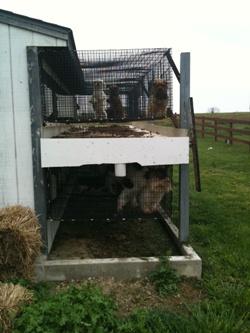 Indiana Amish puppy mill