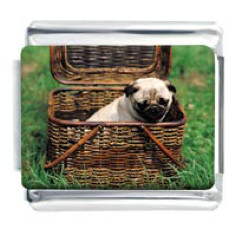 Pug in basket