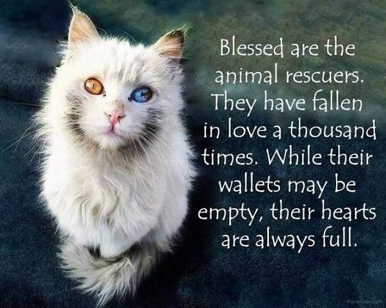 animal rescue2
