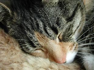 sick cat 3