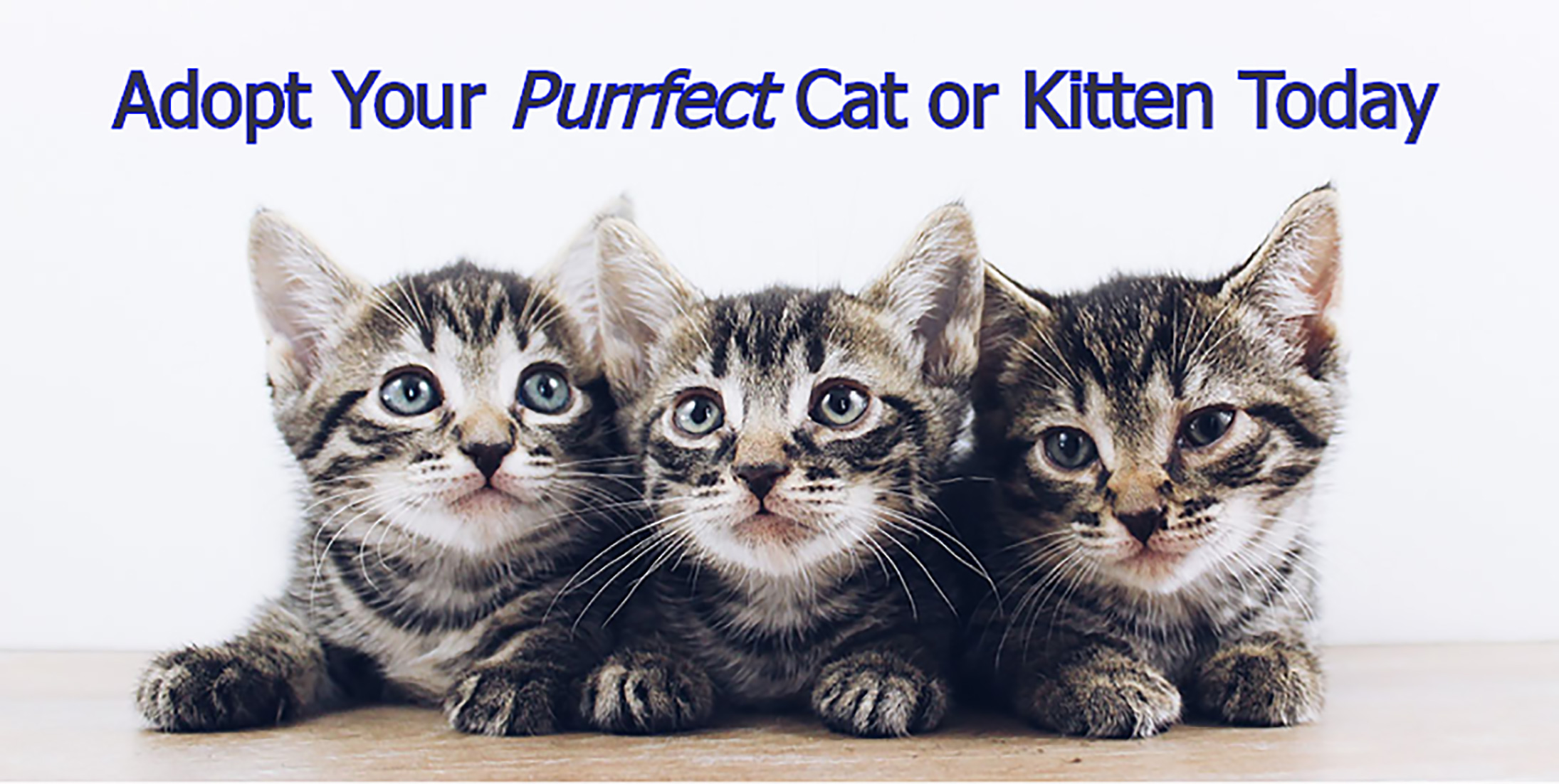 Adopt your perfect cat or kitten today!