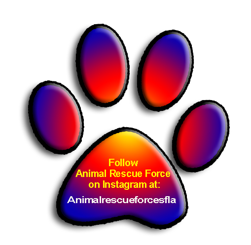 instagram PawPrint