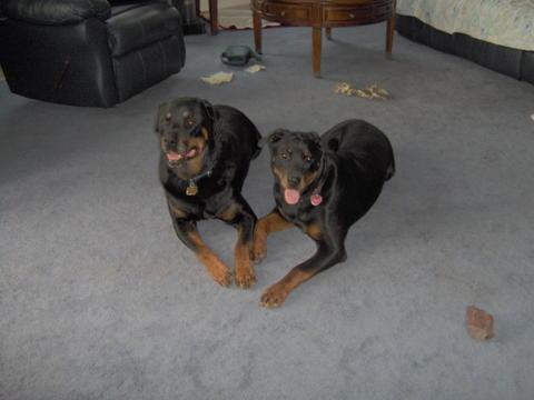 Butch & Gussie