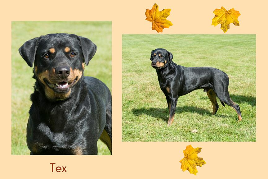 Tex duo leaf