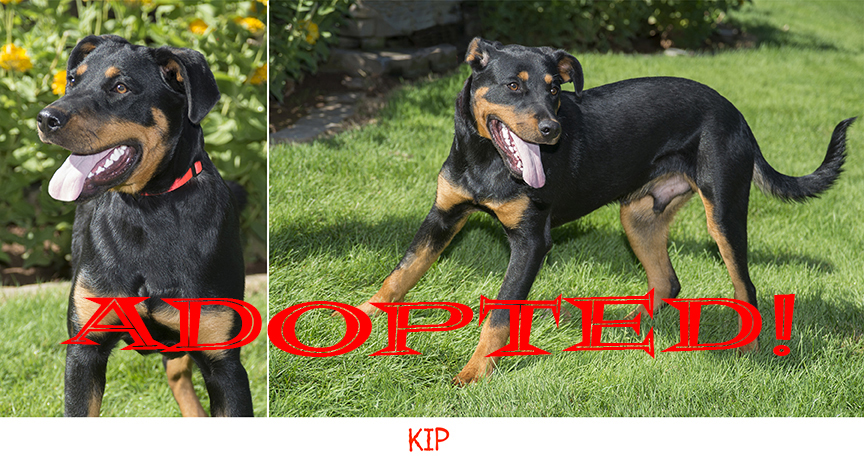 Kip Adopted