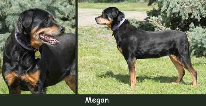 Megan Duo