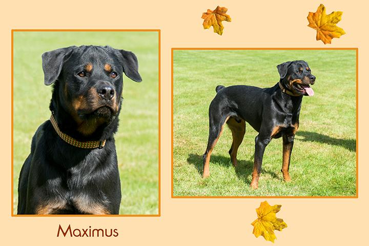 Maximus leaf duo