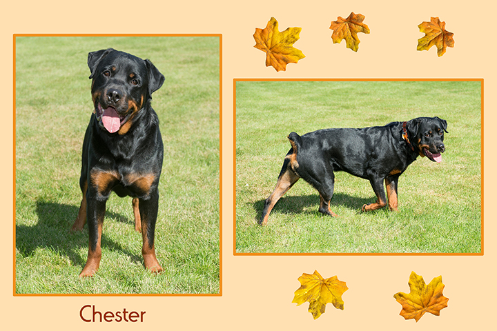 Chester leaf duo