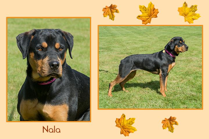 Nala leaf duo