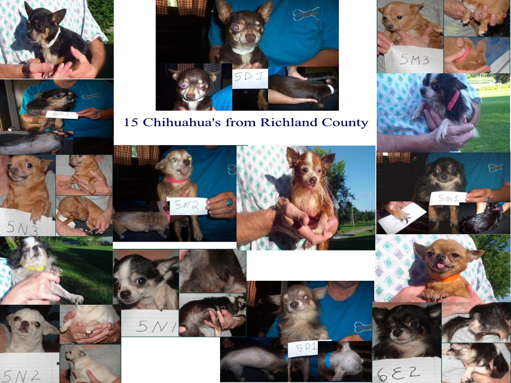 Richland County Chi's