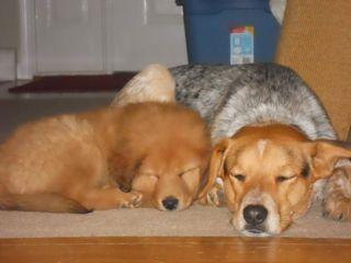 fluffy pup1