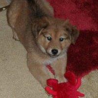 fluffy pup2.jpg