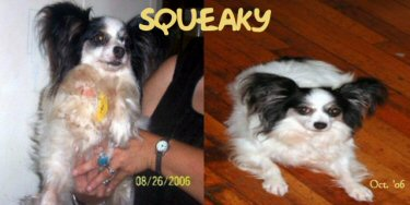 Squeakyb