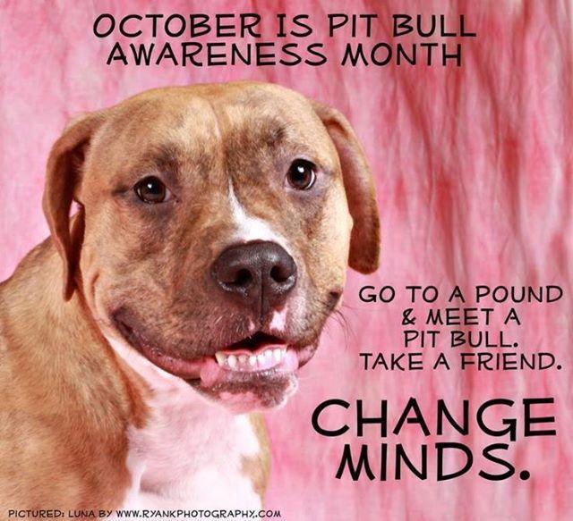 Pitbull Oct Campaign