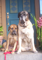 2 dogs leaning