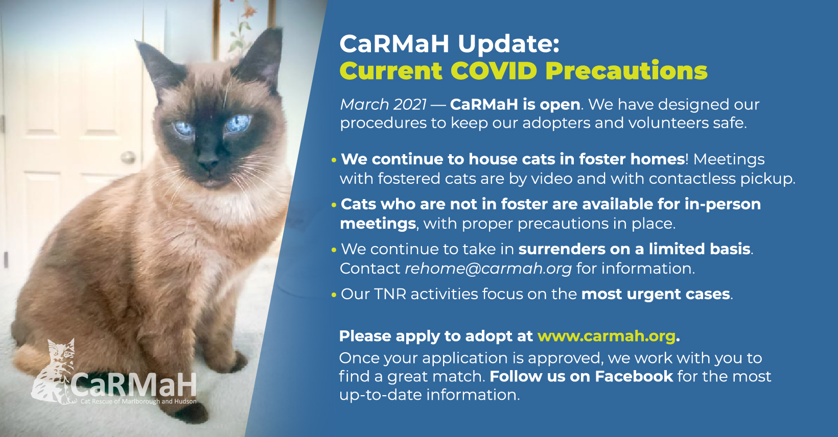 An image of a Siamese cat with very blue eyes. Next to it is white text reading CaRMaH Update: Current COVID Precautions