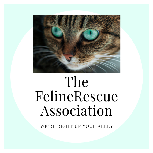 The Feline Rescue Association Logo