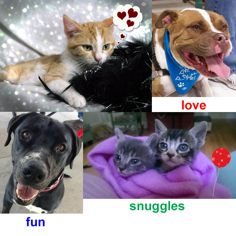Foster Pet Collage