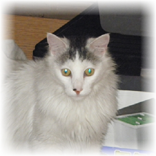 Web Image: Virginia the cat