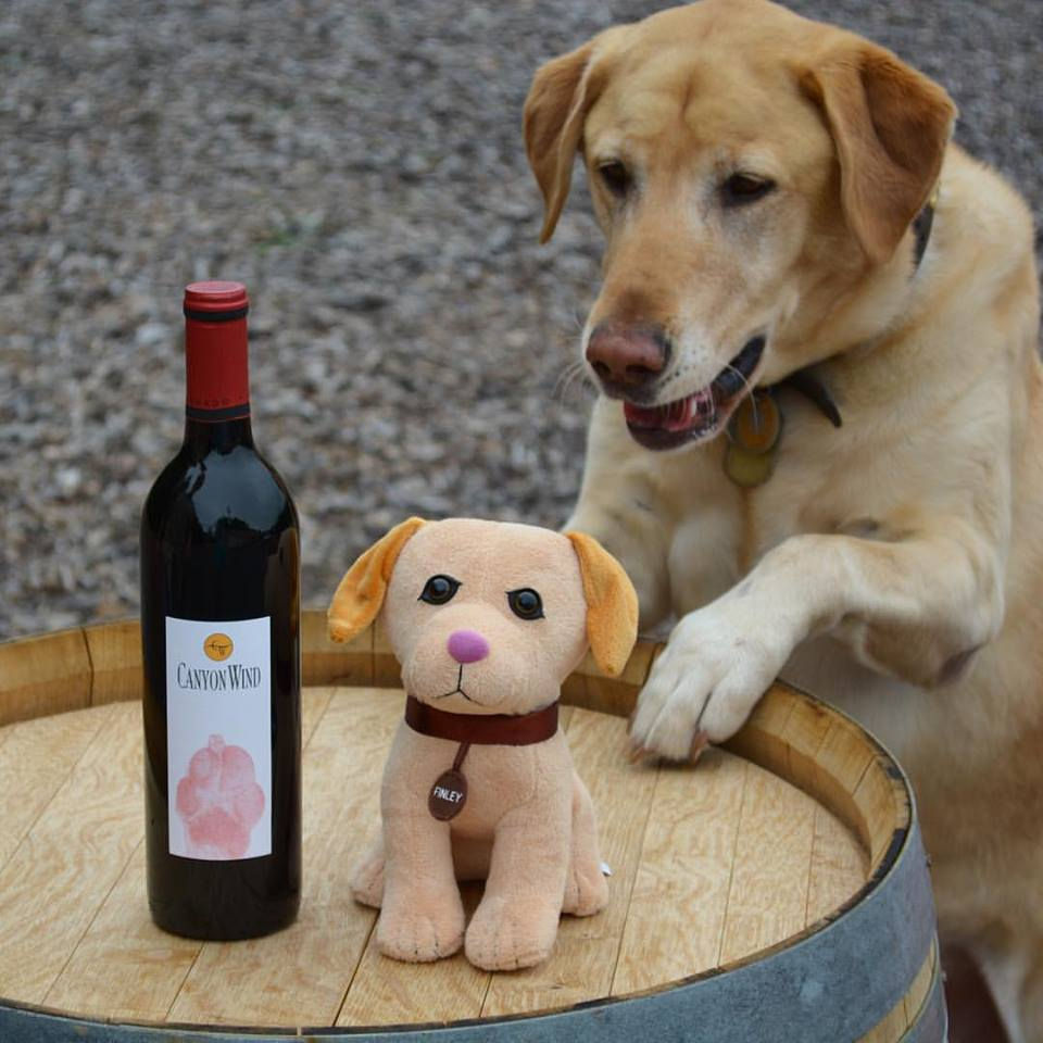 Finley and Red Paw Wine
