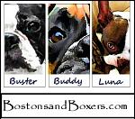 Bostons&boxersAvtr
