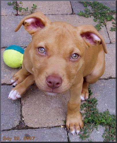 Dog Breeds With Hazel Eyes