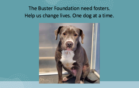 fosters needed 9/20
