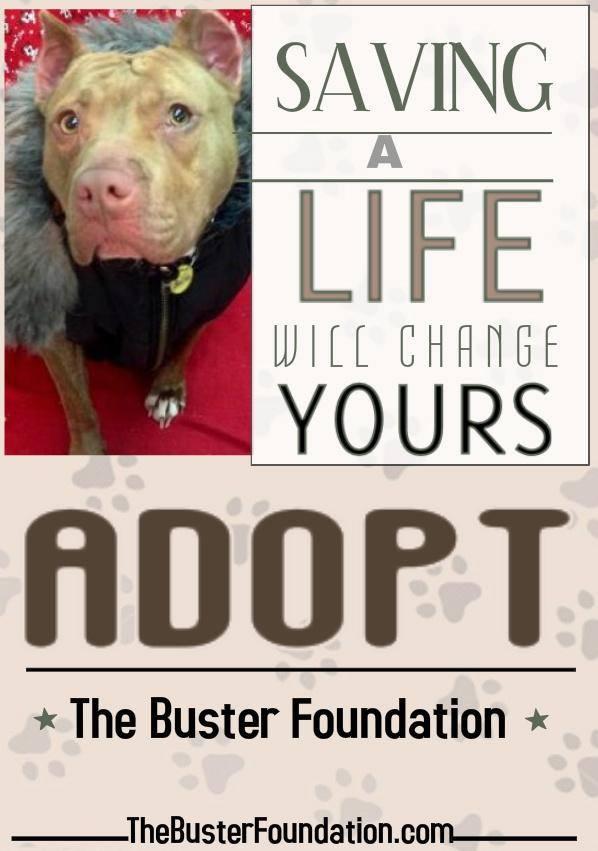 save a life- adopt