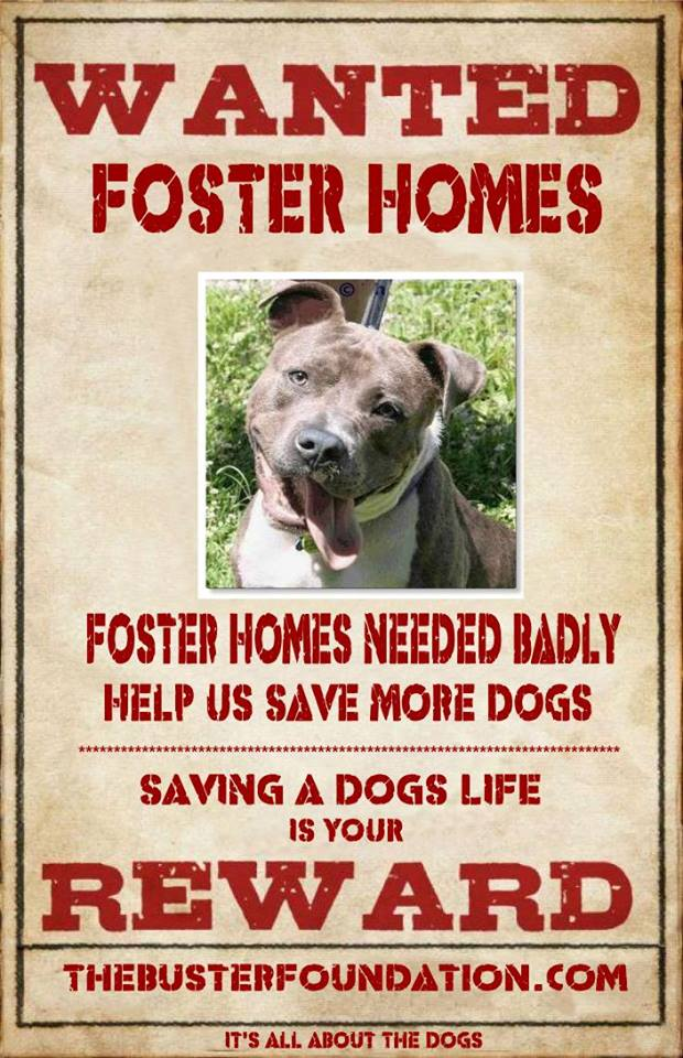 Fosters Wanted