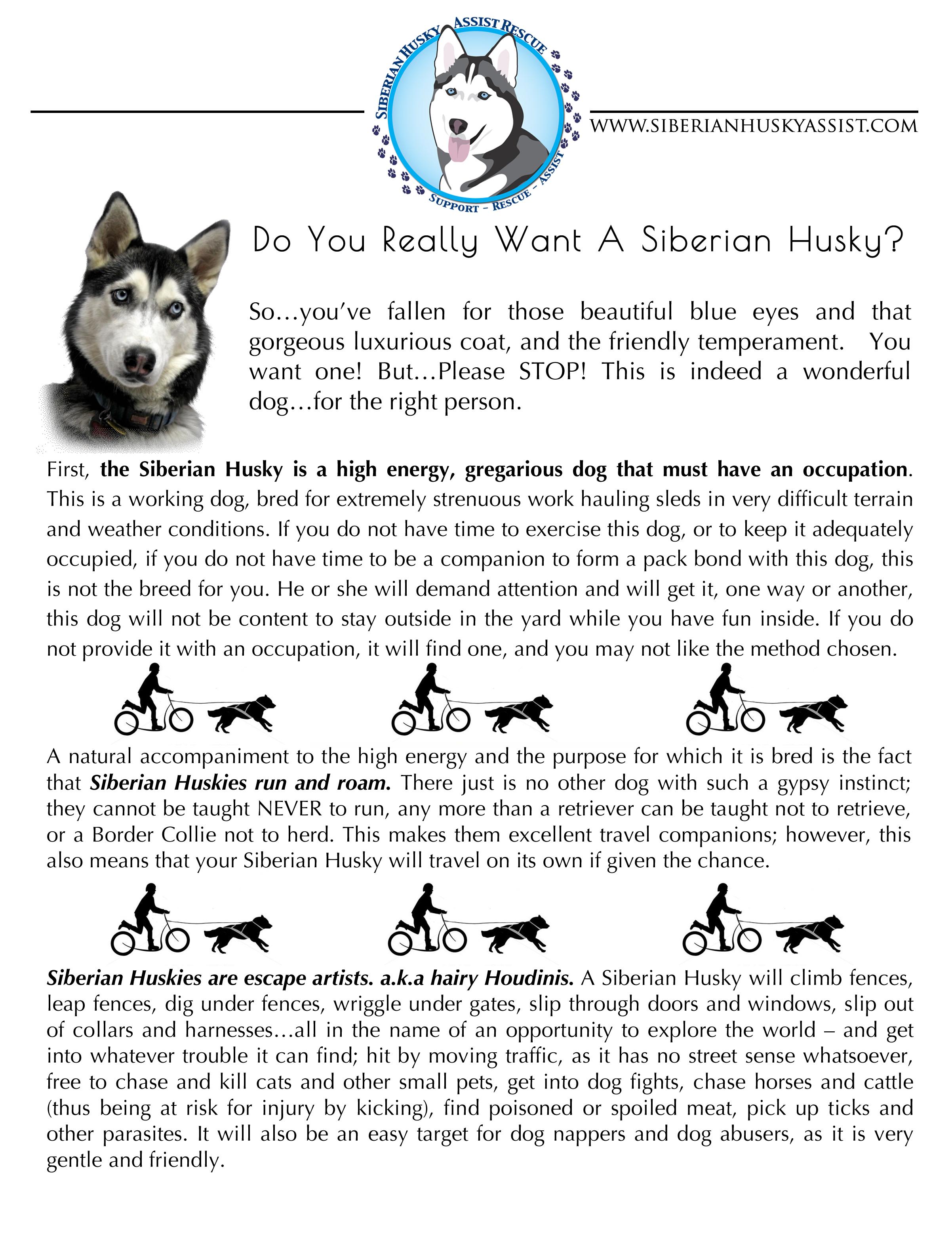 Husky Education