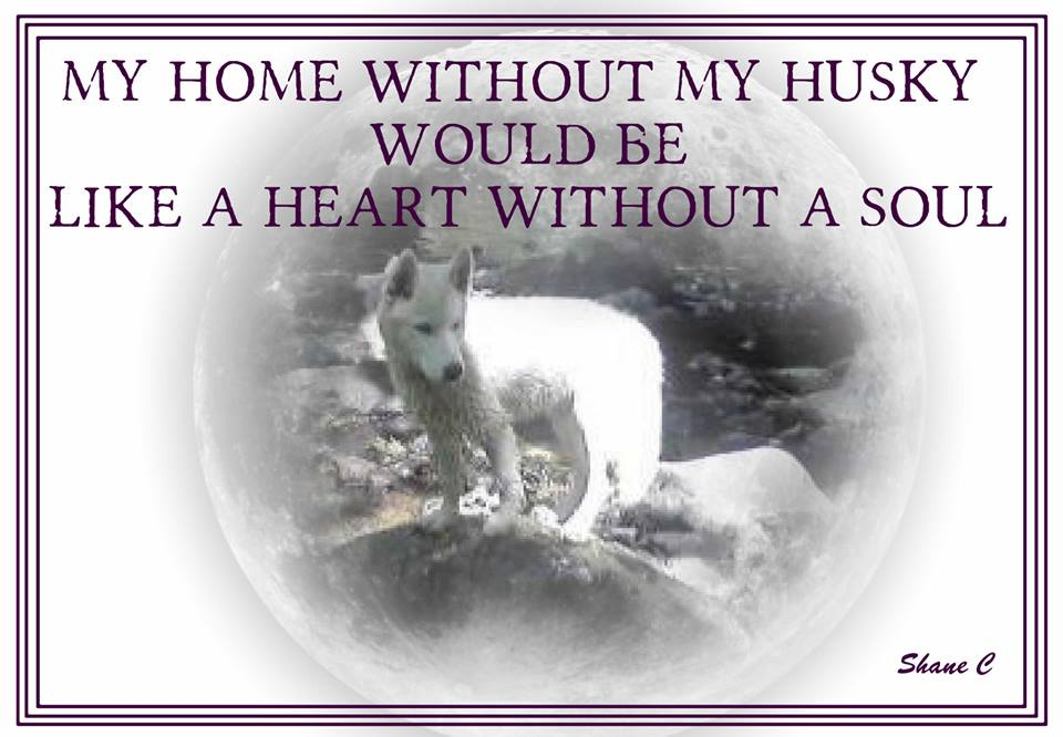 Husky heart home