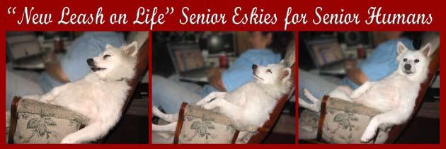 PA Sweety Senior Banner