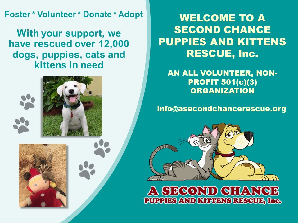 Welcome to A Second Chance Puppies and Kittens Rescue!