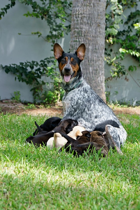 J Mom and 8 Pups