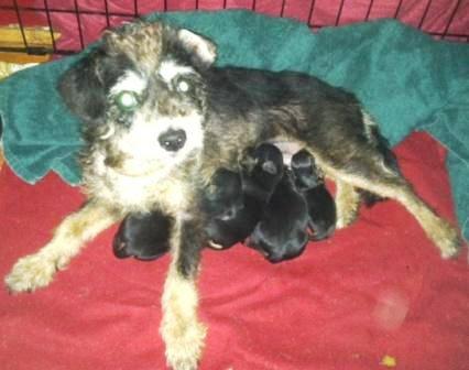Terrier Mom