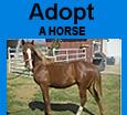 banner adopt a horse 2