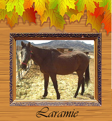 Laramie top 3