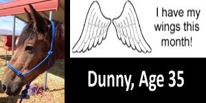 GA Dunny Wings