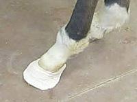 Trucker shoe 1