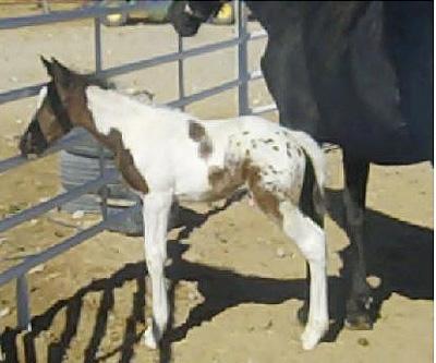 ochocinco's baby3