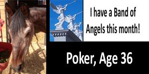 ga poker boa