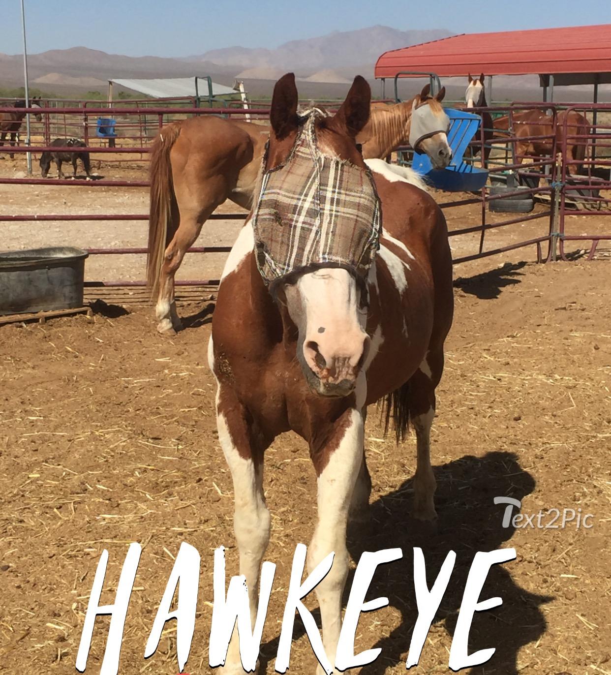 Sponsorhawkeye16